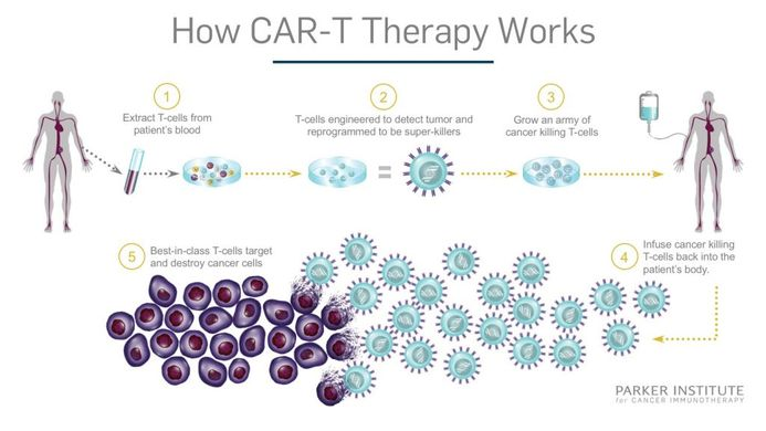 https___www.parkerici.org_wp-content_uploads_2017_08_CAR-T_Therapy-How-it-Works_Final-1024x576